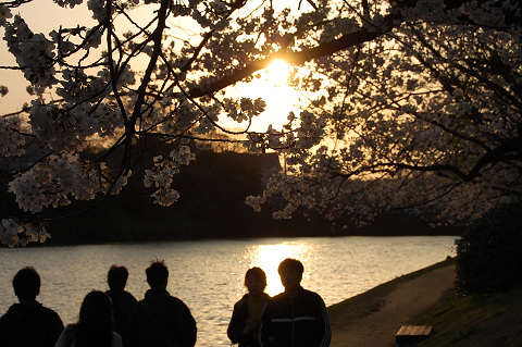 2010年の桜-ほ