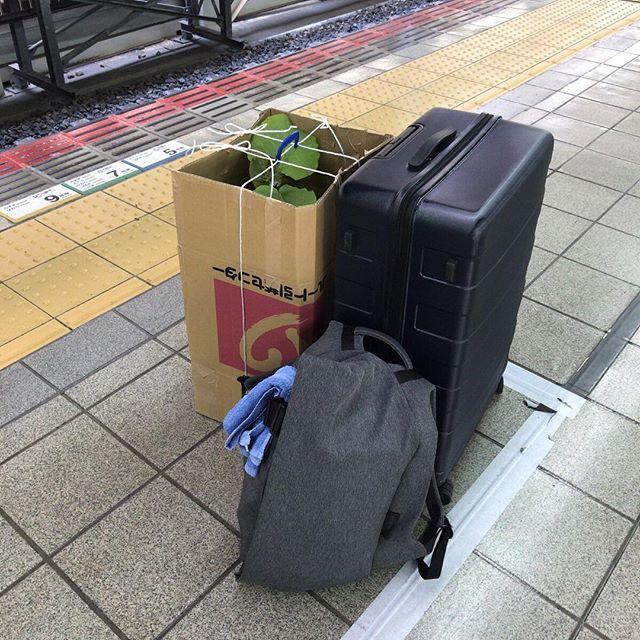 今日は #ウンベラータ さんを連れているので新幹線で。