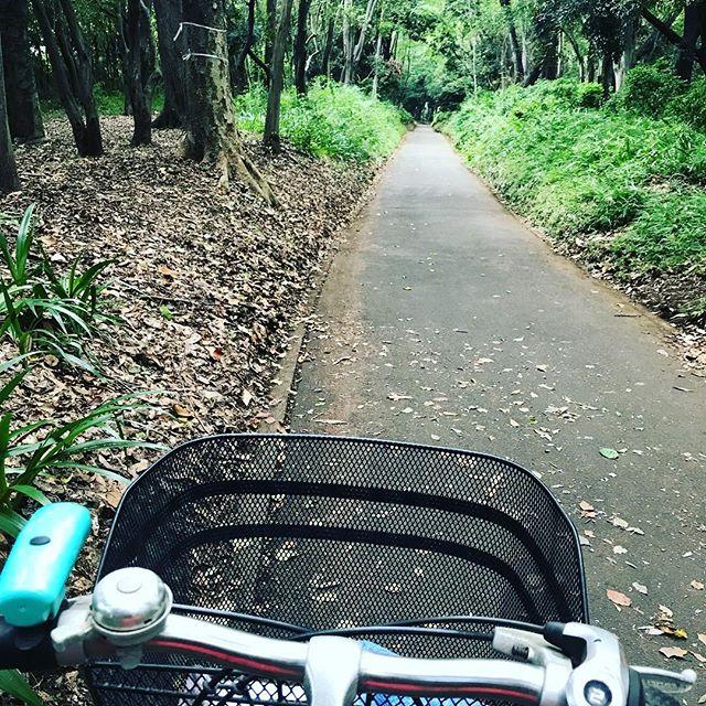 しばらく前の写真。自転車でうろうろ。森、と呼べる公園を発見。空気余計に吸ってきました。#今日の一点透視図法