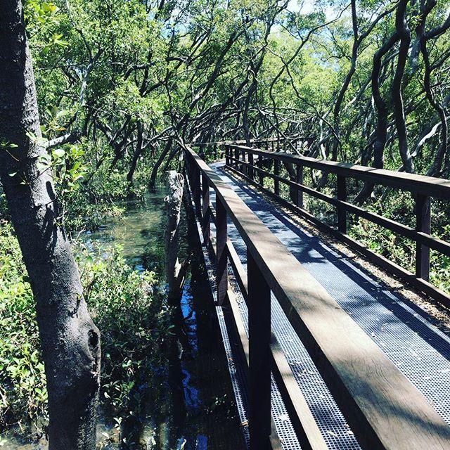 ランニングしてたらマングローブの森にたどり着いた。あまりにも自然を体感できる場所だったので少し後に少年らを連れて再訪しましたよ。#今日の一点透視図法
