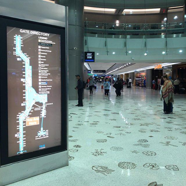 とーっても広い空港。ここだけでランニングコースとかになりそう。床には海の生き物のモチーフ #今日の一点透視図法